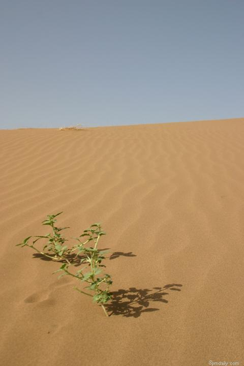 Alone in desert