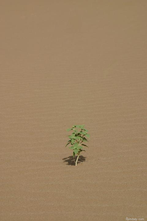 Alone in desert II